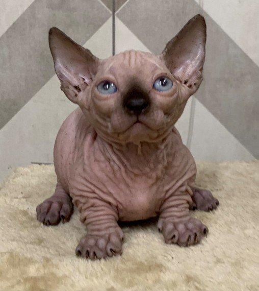 lovely-little-sphynx-kittens-very-wrinkly-5fb817ba6eaf2.jpg