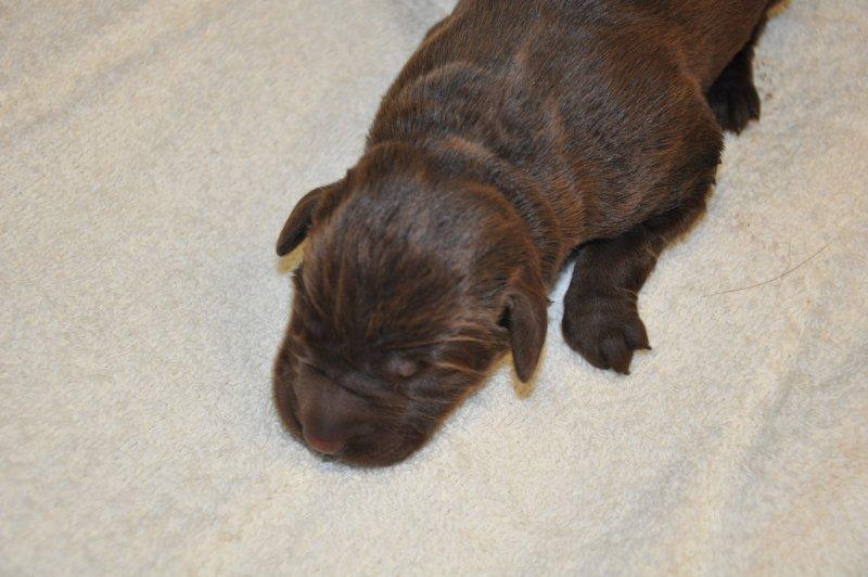 Puppies 223215.JPG