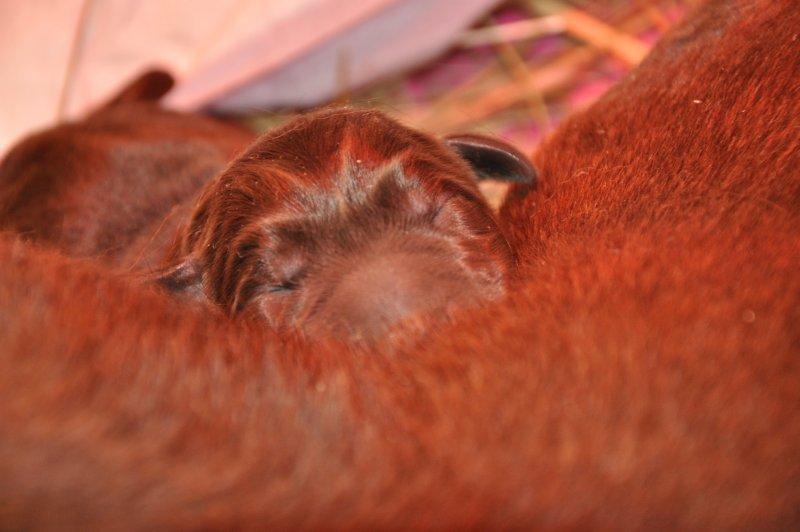 Puppies 223216.JPG