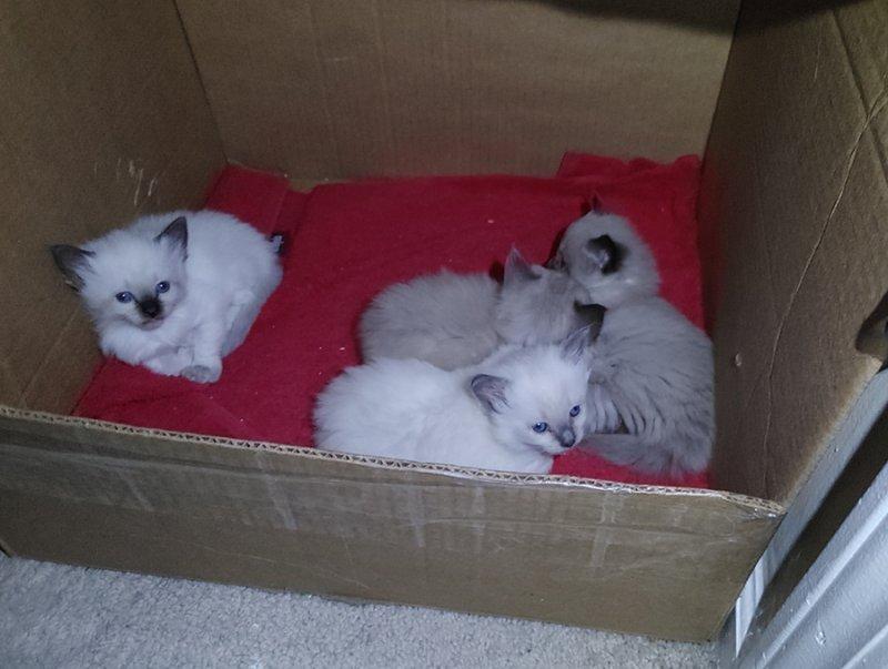 Kittens2-20210410.jpg